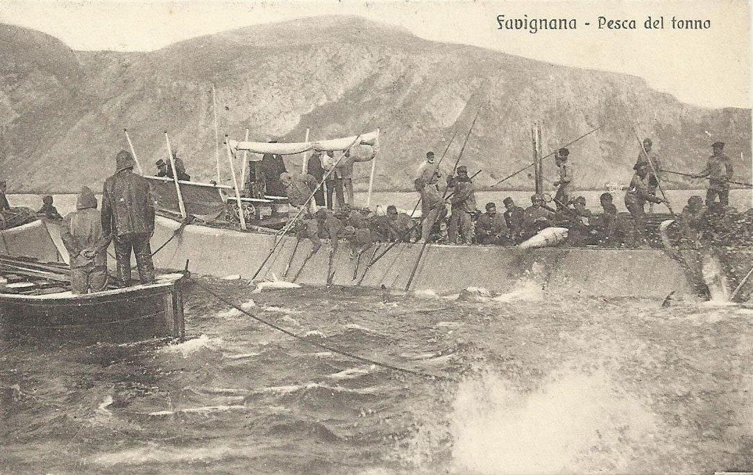 Favignana mattanza foto antica tonni tonnara Florio